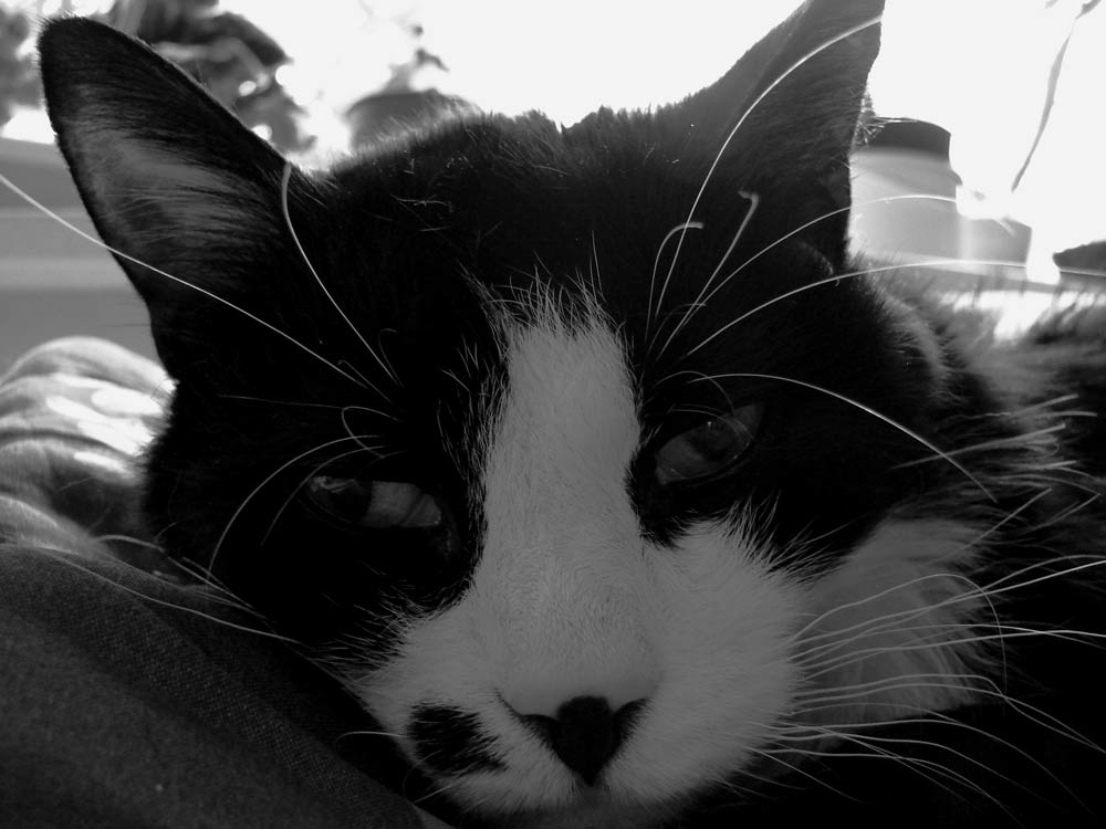 A couple B&Ws for critiques-bw-cat.jpg