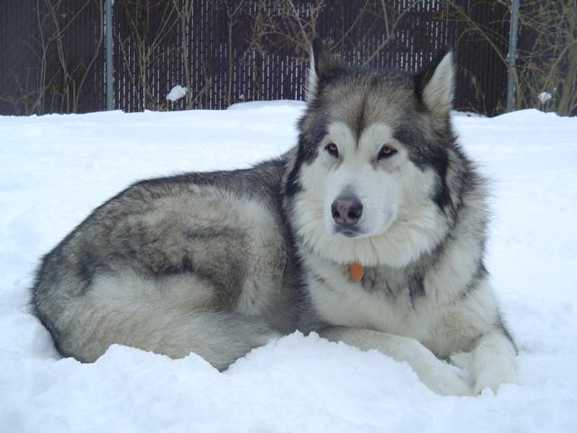 Do you consider your pet(s) as family members???-dsc00272.jpg
