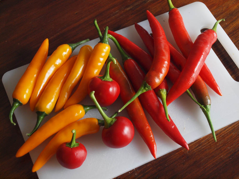 What to do with chillies-fresh-chillies.jpg