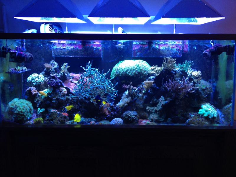 Anybody have a fish tank?-image-3782561152.jpg
