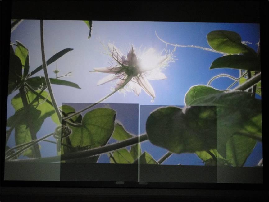 Screen suggestion for an Epson 8350-sunshine.jpg