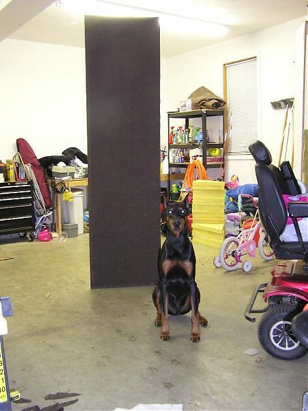 My DIY treatments-tower-dog.jpg